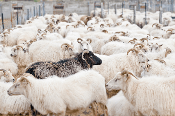 The Implications of Herd Mentality | Ogilvy